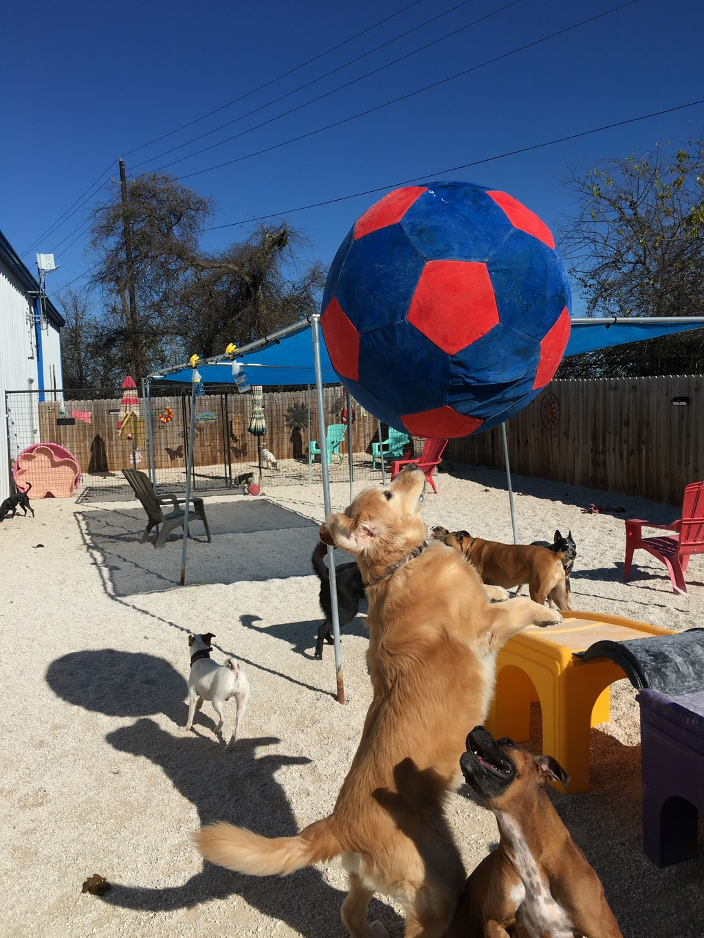Ponderosa Pet Resort Sit Stay Play Good Dog