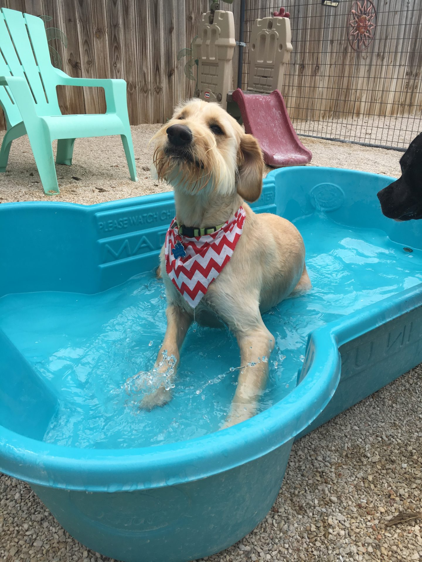 Pet Care Services Dog Daycare Georgetown Tx Ponderosa