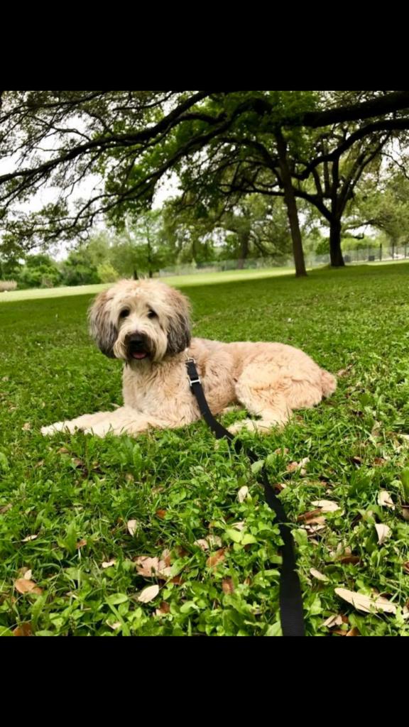 Dog Training, Professional Dog Trainer Georgetown, TX