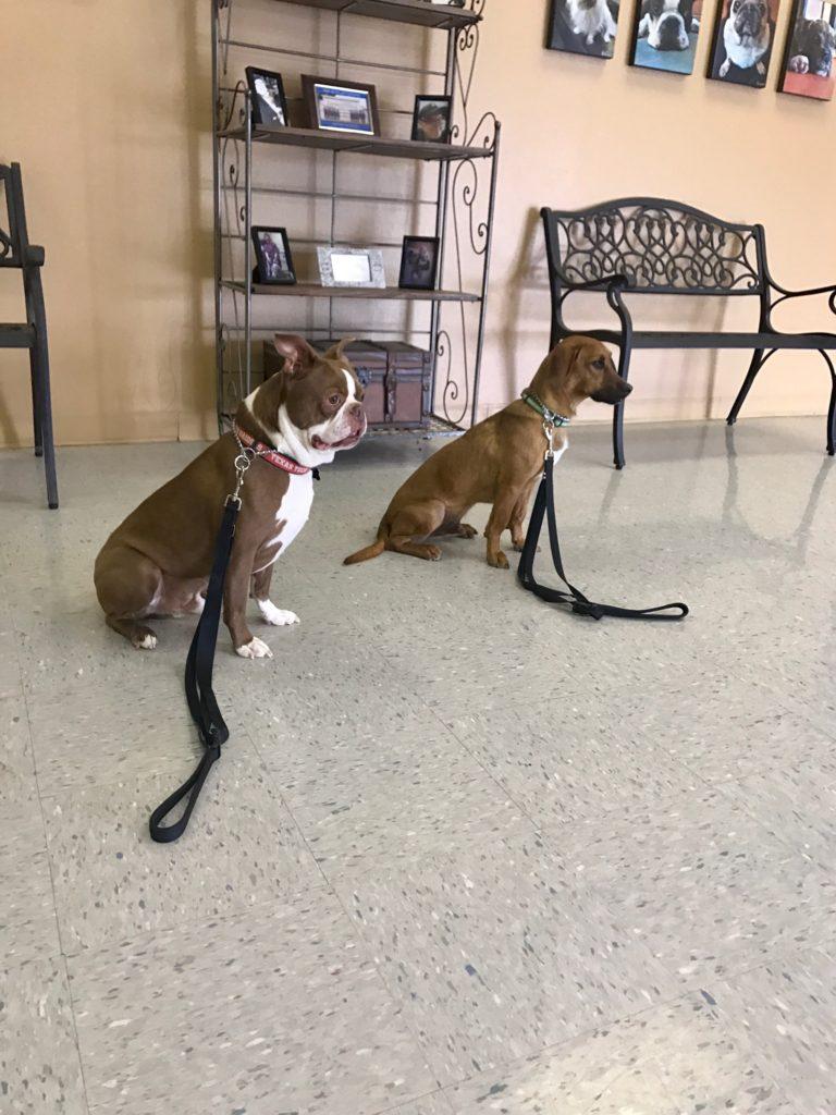 Dog Training, Professional Dog Trainer Georgetown, TX – Ponderosa