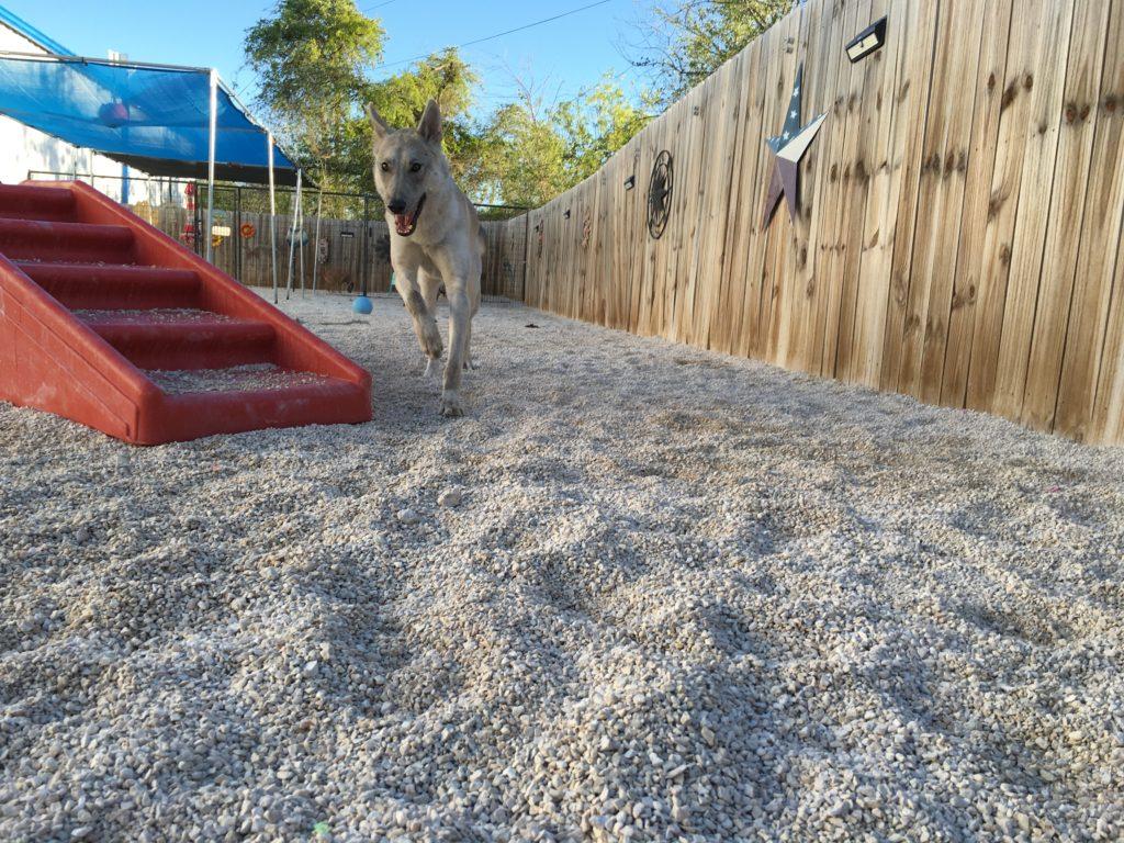 dog day care georgetown tx at ponderosa pet resort u2013 ponderosa